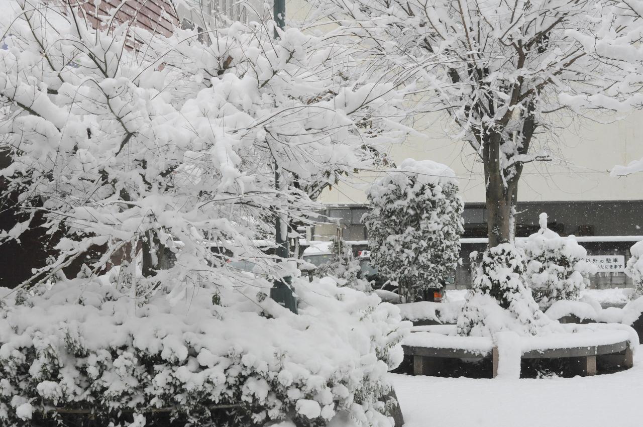 11日の雪