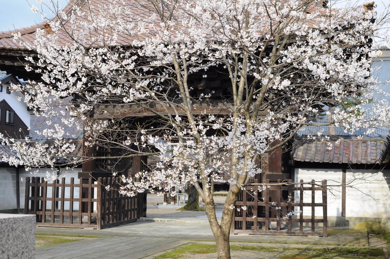 ご本山の桜