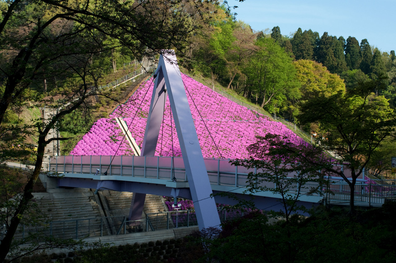 西山橋の芝桜