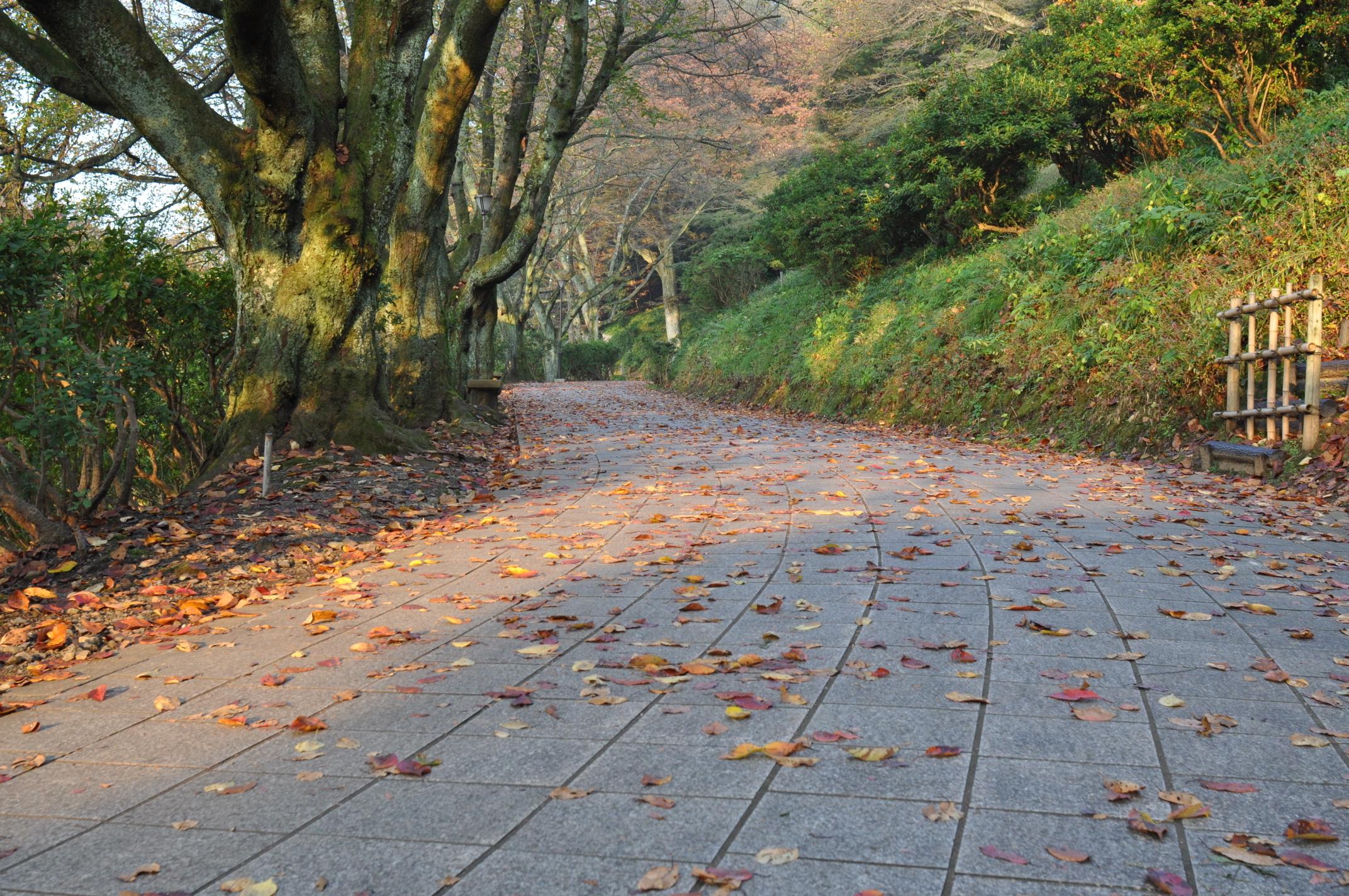 西山桜落ち葉