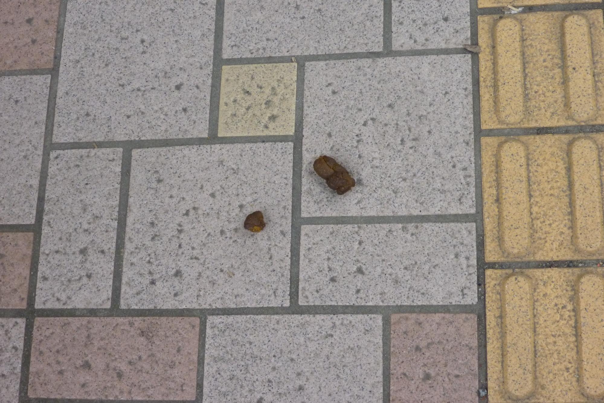 歩道の犬の糞