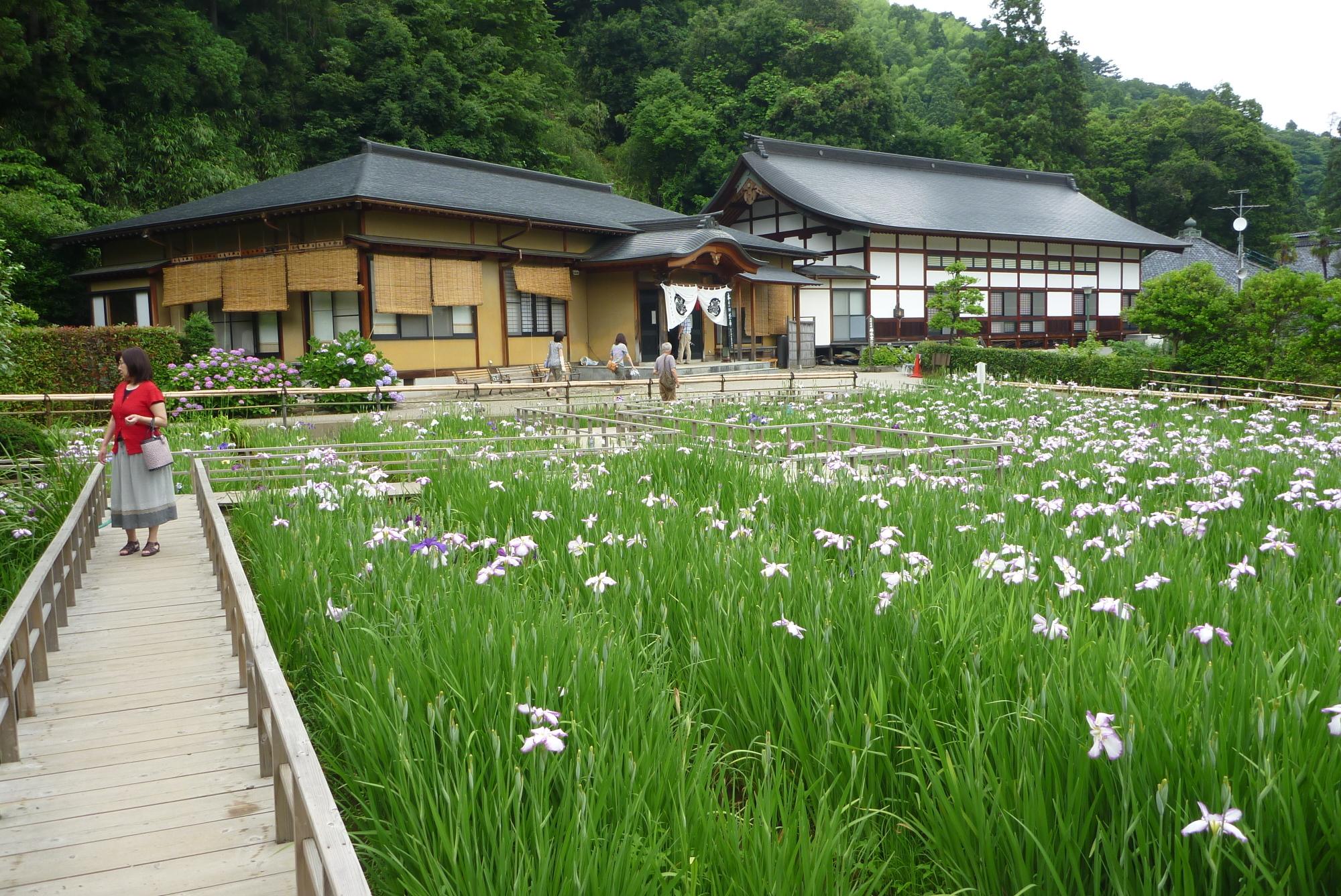 大安禅寺の花しょうぶ